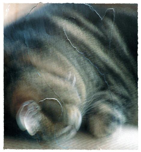 Sleep, Ibis sleeping, illustration by Enkeling